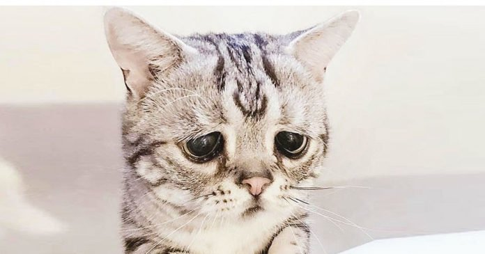 Sad Cat Face