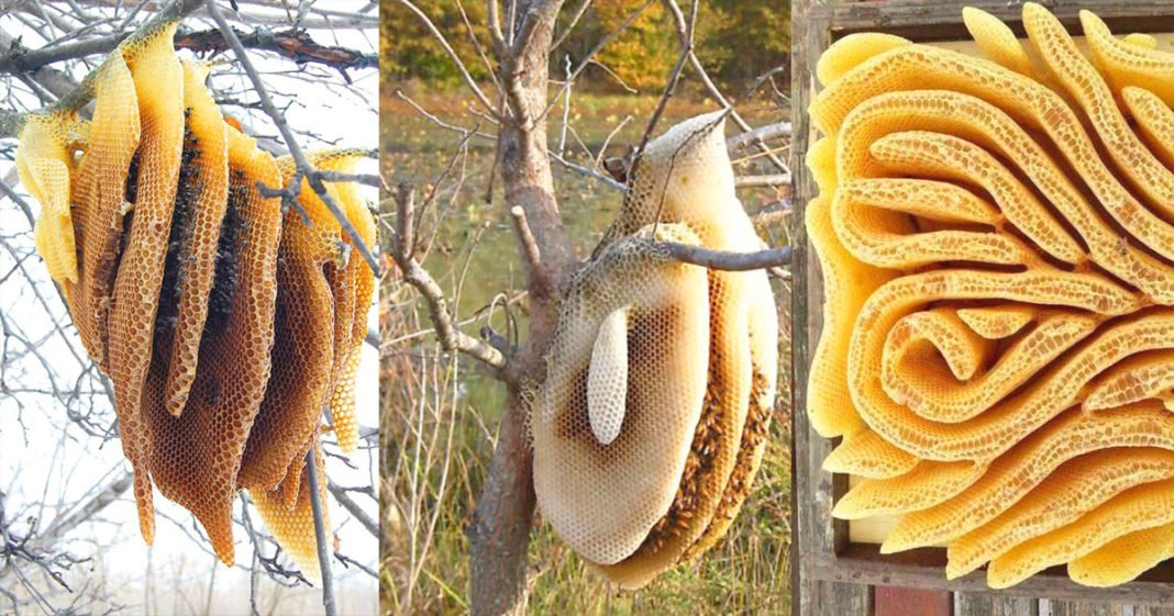 Amazing Looking Honeycomb Pictures To See - Nature World Wonders