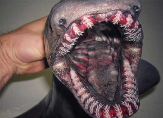 Deep Sea Monsters