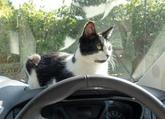 9 Tips For Transporting Cats In Cars - Moving Long Distance With Cats
