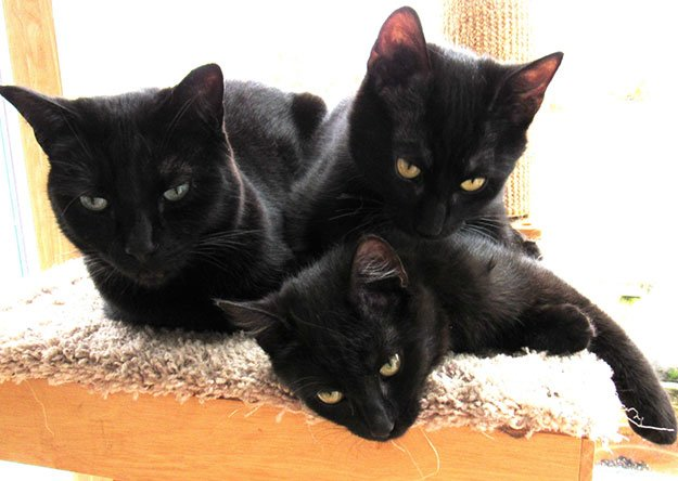 Behavioral Problems In A Multi-Cat Household