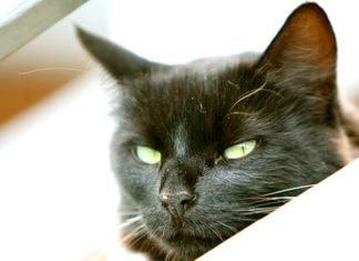 Cat Behavior Problems - How To Prevent and Help Them