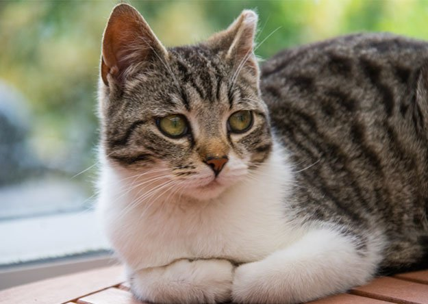 Common Behavioral Problems In Cats