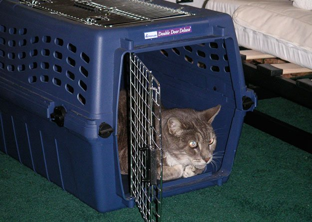 cat transport box at home