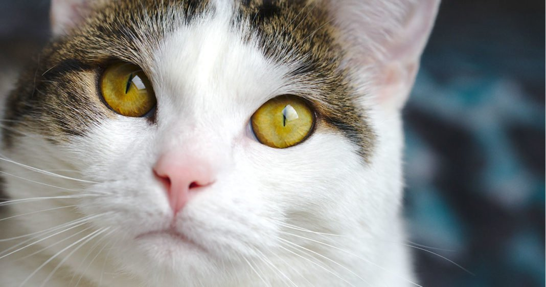 Cat Spraying And Urine Marking: All About Why And What To Do