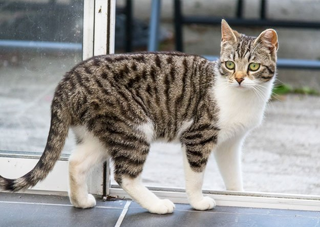 Cats Have Two Types Of Urine Markings - Spraying and Peeing