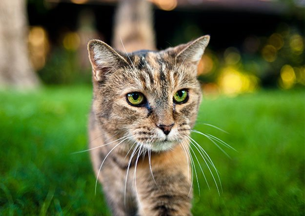 How To Stop Cat Spraying? Control and Avoid Spraying