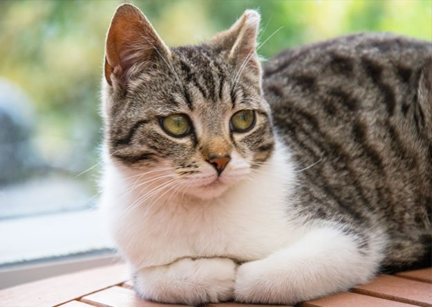 The Reasons Why Cats Are Urine Marking: Medical, Mating, and Stress-Related Issues On