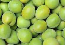 Benefits of Green Plum
