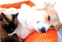 Can Cats and Dogs Live Together In The Same House?