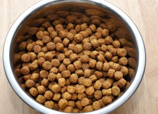 Things To Watch Out For When Buying Dog Food