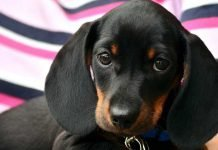 How to feed a puppy? A healthy development advice