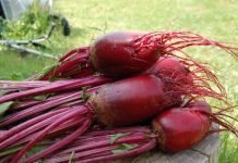 Beet Benefits And Side Effects