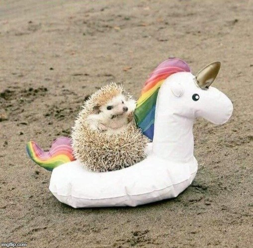 Why can't hedgehogs just share the hedge