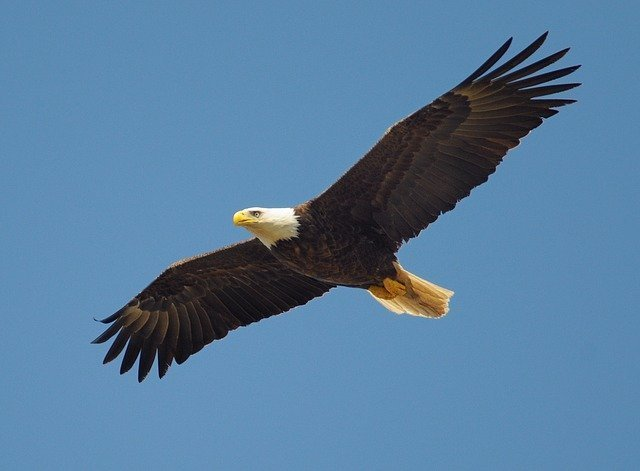 eagles aren't as big as planes
