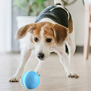 Wicked Ball For Dogs