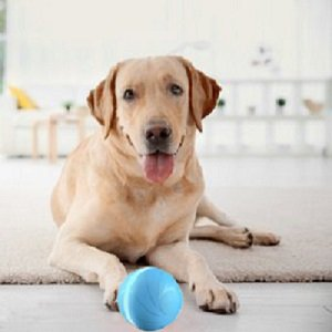 Wicked Ball For Pets
