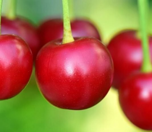 Close-up picture of three cherries