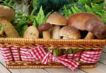 Mushroom Health Benefits and Side Effects - Healthy or Unhealthy?