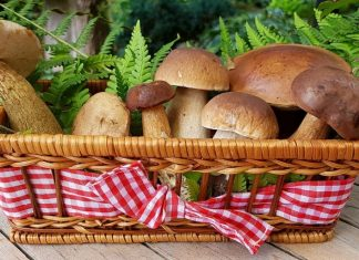 Mushroom Health Benefits and Side Effects