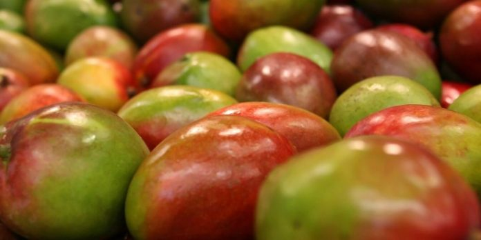 Mangoes benefits and side effects - Healthy or Unhealthy?