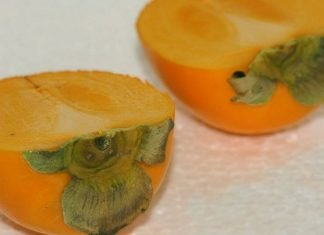 What is the difference between Sharon fruit and Persimmon