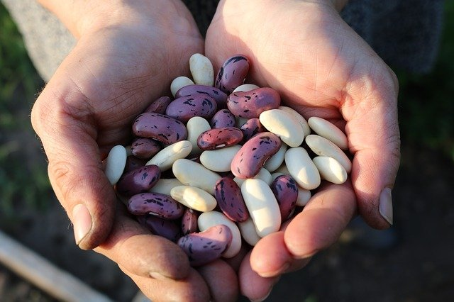 Beans are Healthy Foods for Losing Weight