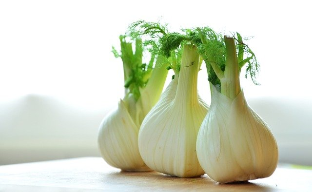 Fennel is Healthy Foods for Losing Weight