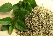Oregano Health Benefits and Side Effects - Application of Herbal Antibiotic