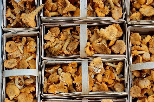 Chanterelles are rich in iron.