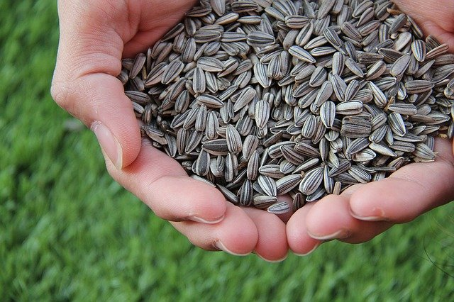 Seeds are foods rich in fiber content.