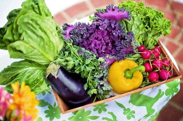 Vegetables are foods rich in fiber content.