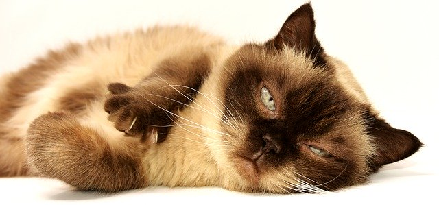 Cat behavior - Why do cats sleep so much