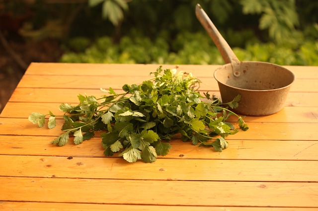 Usage of Cilantro For Health