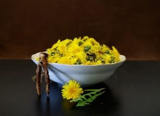 What is dandelion root good for?