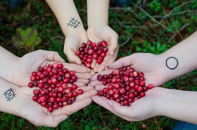 The Cranberries Benefits for Health