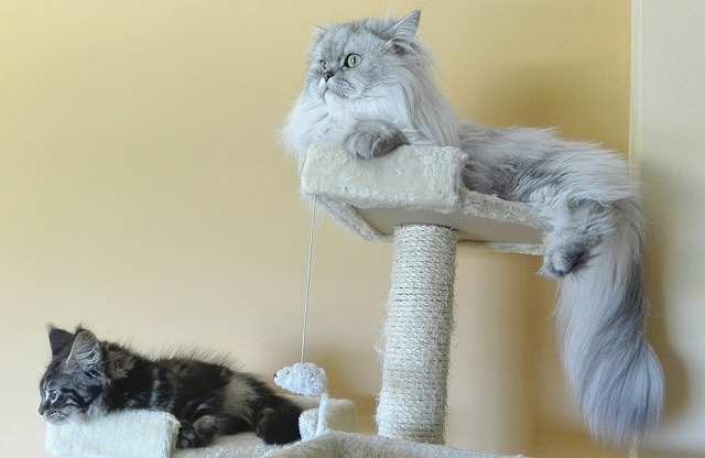 Building a DIY cat scratching post for cats yourself