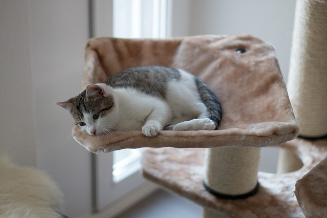 Building a scratching post yourself - that is what you need.