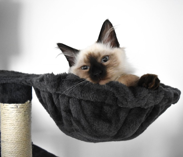 DIY Cat Scratching Post - Cuddling dens for the cats