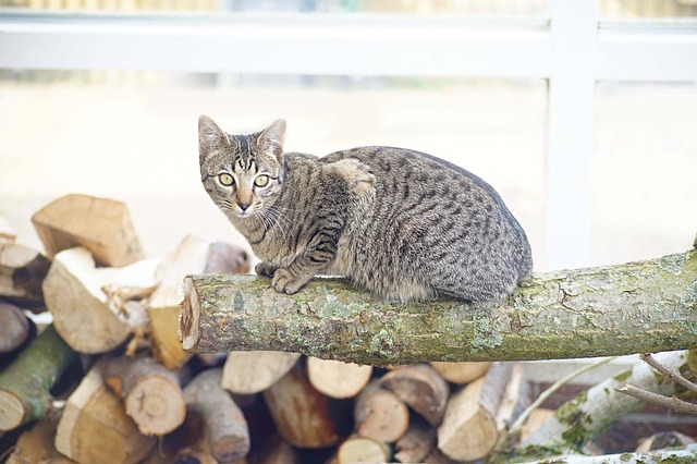 DIY Cat Scratching Post - Scratching trunks for your cats