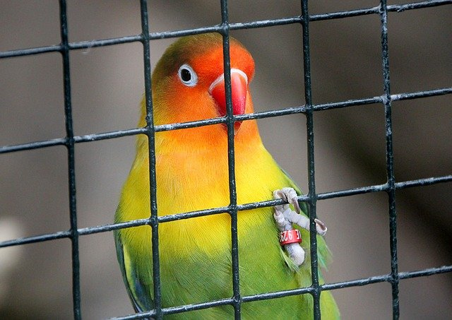 Choosing the best place for a birdcage