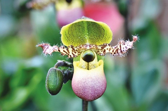 Eliminate aphids, lice, mealybug, or scale insects on orchid with biological and chemical agents