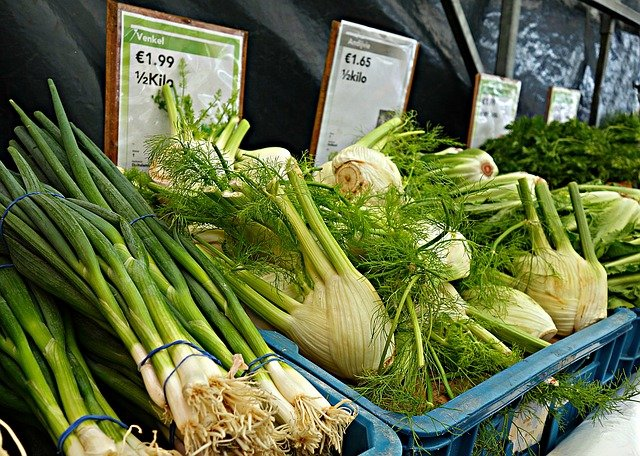 How do you recognize fresh fennel?
