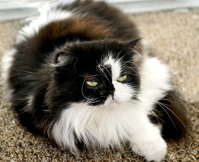 Preventing cat fur with brushing