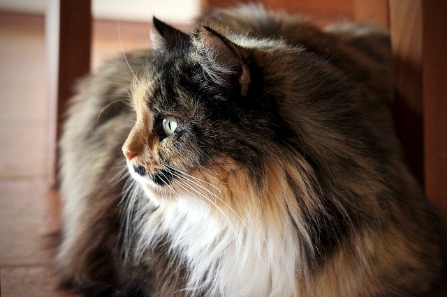 Removing matted cat hair