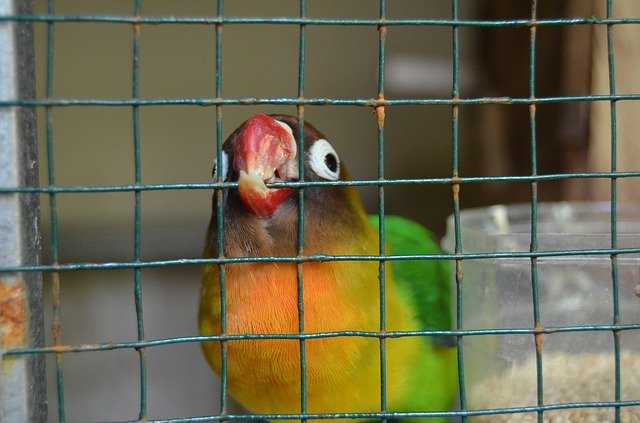 Round bird cages are not suitable for the attitude
