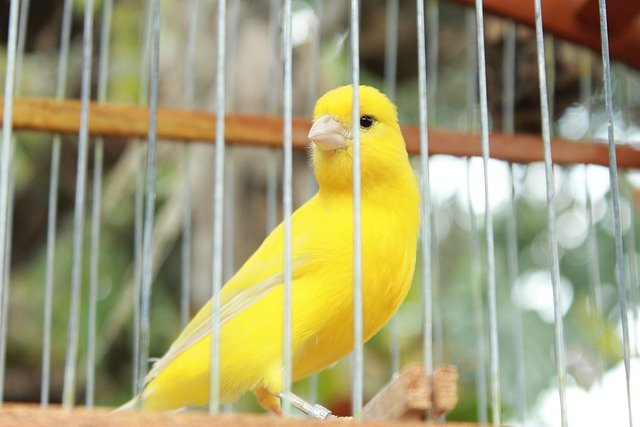 What are the right canary cage accessories?
