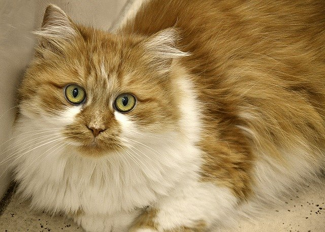 What causes the matting in cat fur in summary explained?