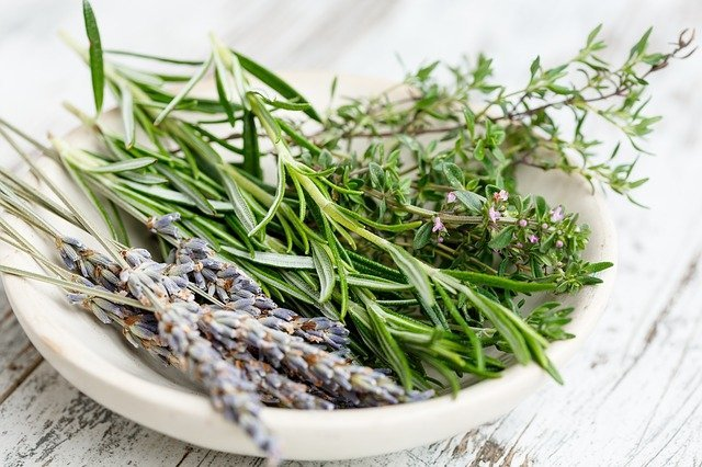 10 Best And Most Important Medicinal Herbs And Their Effects