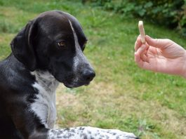 18 Best Basic Dog Handling Techniques You Can Learn!
